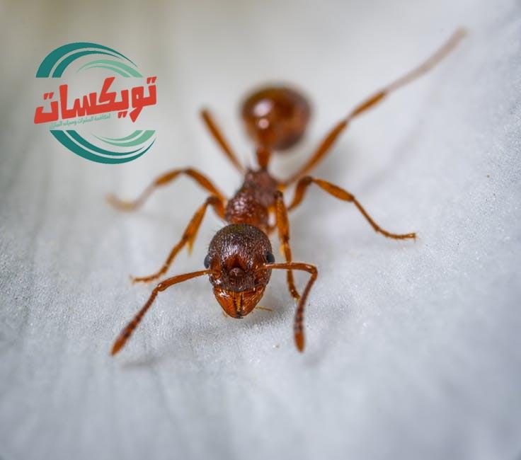 شركة مكافحه النمل الابيض بجنوب الرياض