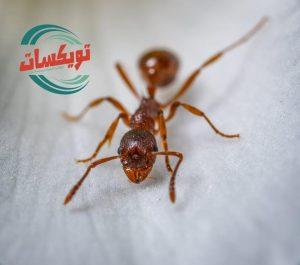 شركة مكافحه حشرات بالمزاحميه