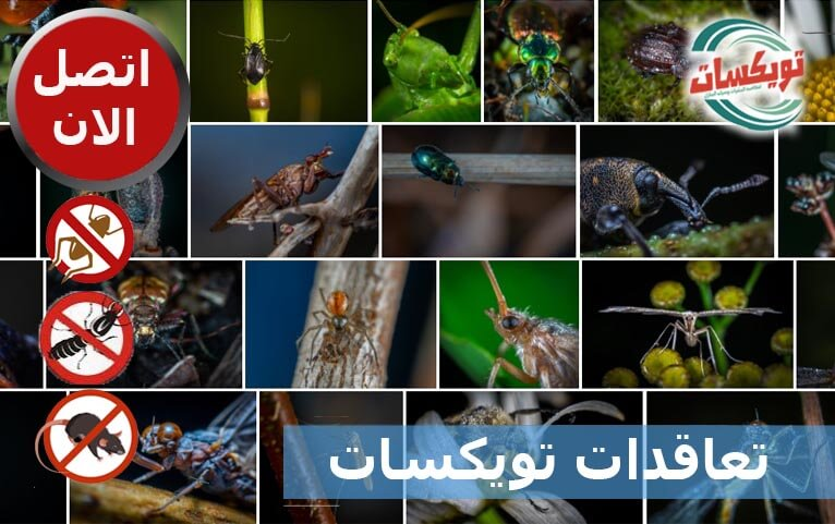 تعاقدات تويكسات شركة مكافحة حشرات ورش مبيدات