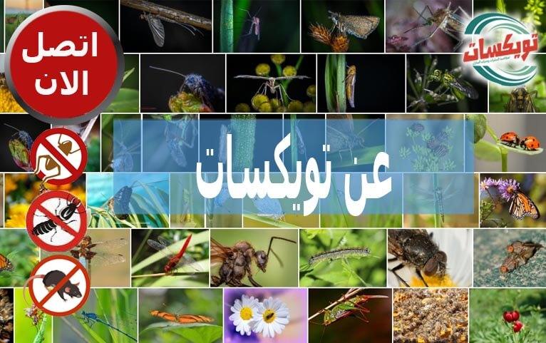 عن تويكسات شركة مكافحة حشرات ورش مبيدات