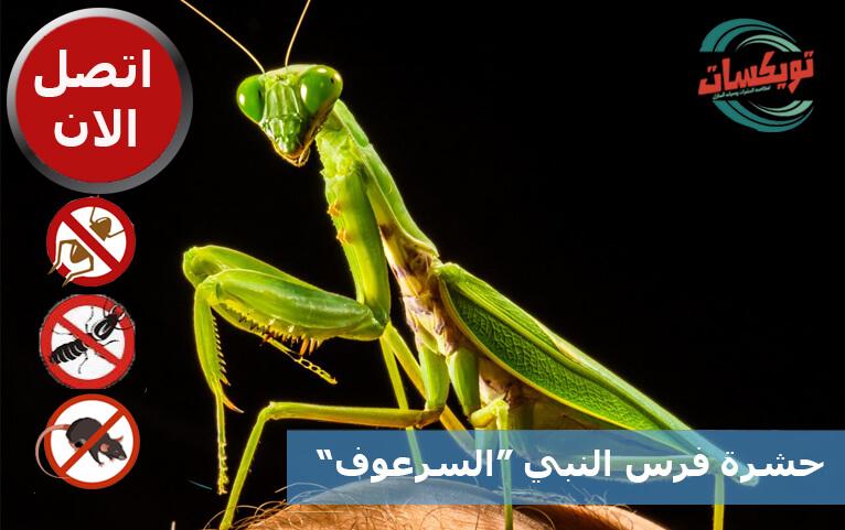 Photo of حشرة فرس النبي
