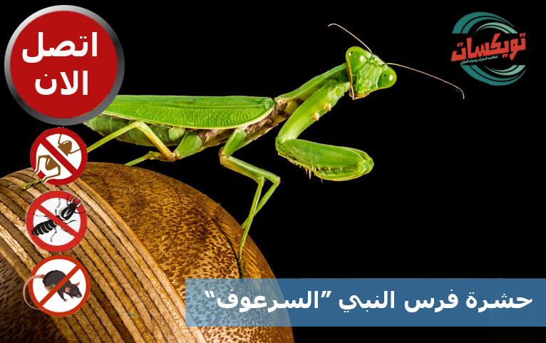 حشرة فرس النبي