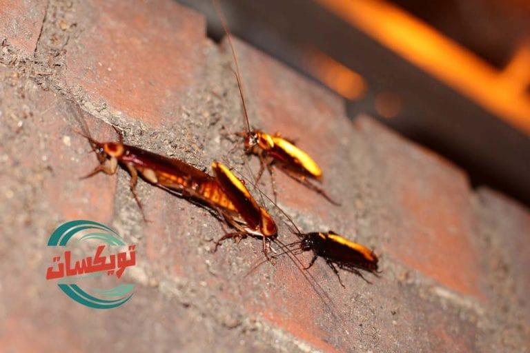 شركة مكافحة الحشرات بحائل