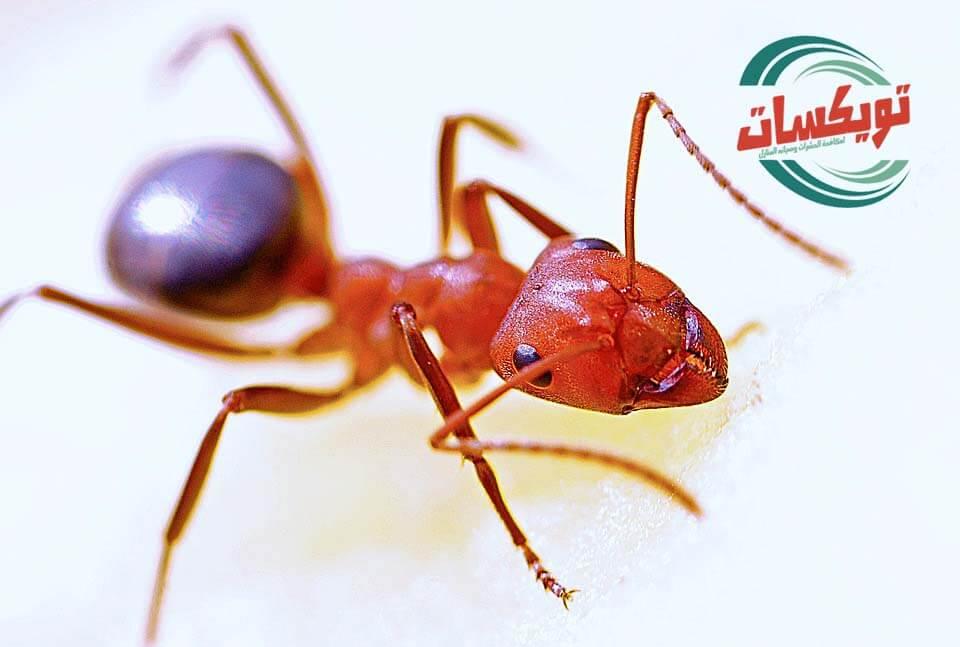 Photo of شركة رش دفان بالمزاحميه