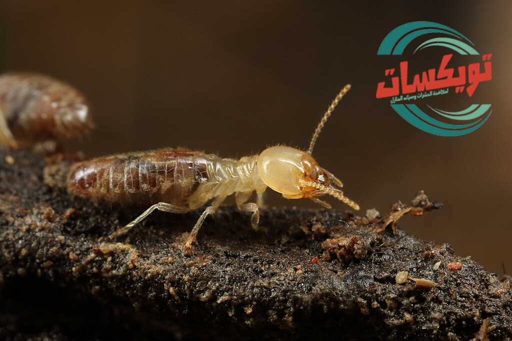 Photo of شركة رش دفان بالرس