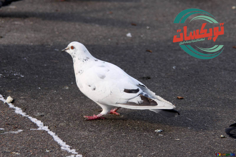 Photo of شركة تركيب طارد حمام بالجبيل