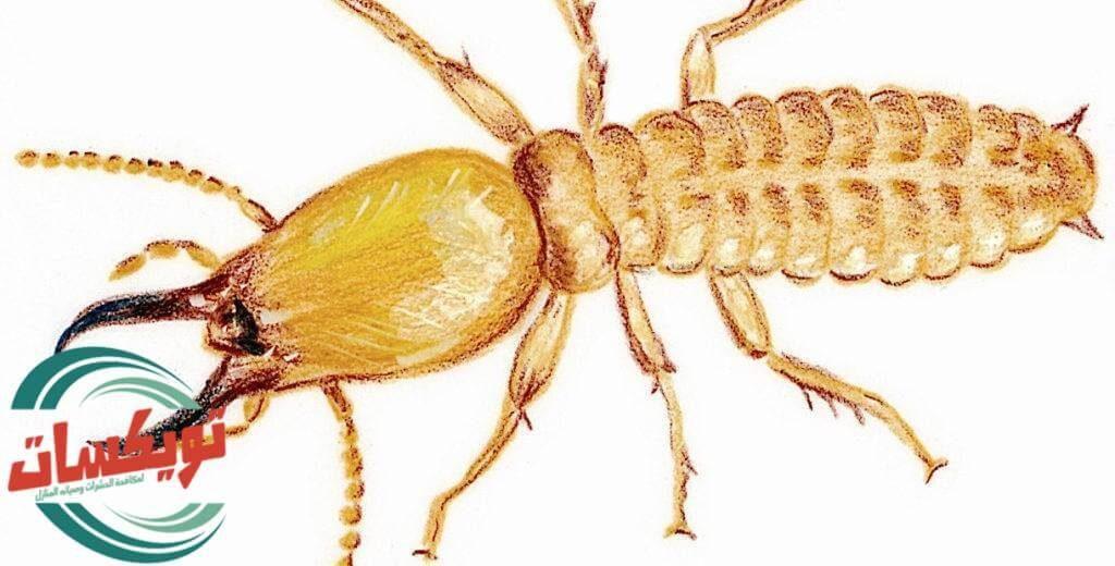 تليفونات شركات مكافحة النمل الابيض بالرياض