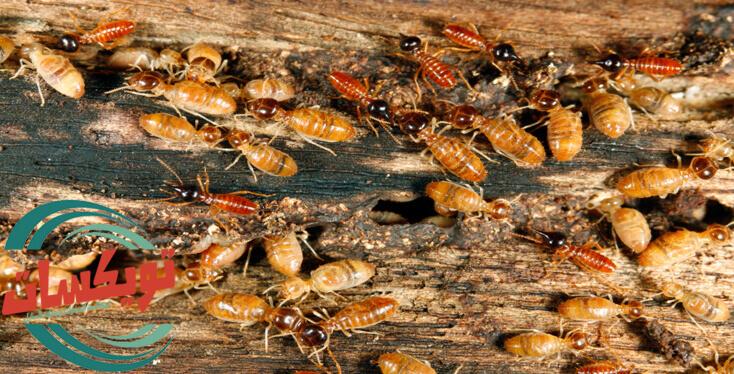 Photo of شركة مكافحة النمل الابيض بالجبيل
