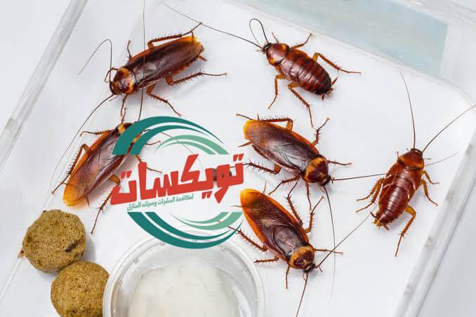 Photo of شركة مكافحة الصراصير بالقطيف