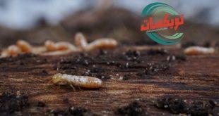 شركة مكافحة النمل الابيض بالنعيرية