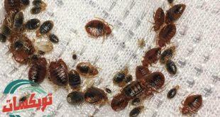 شركة مكافحة حشرة البق بالرياض