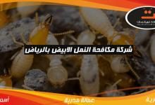 Photo of شركة مكافحة النمل الابيض بالرياض