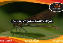 Photo of شركة مكافحة حشرات بالاحساء