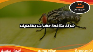 Photo of شركة مكافحة حشرات بالقطيف