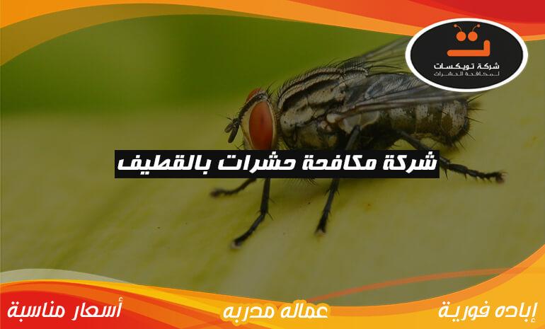 شركة مكافحة حشرات بالمدينه المنوره