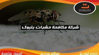 Photo of شركة مكافحة حشرات بتبوك