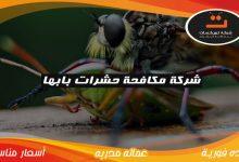 Photo of شركة مكافحة حشرات بابها
