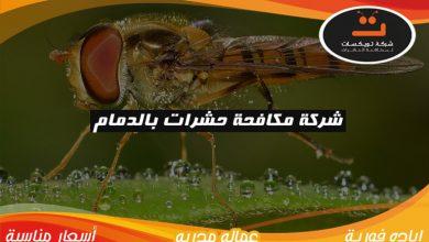 Photo of شركة مكافحة حشرات بالدمام
