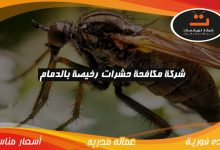 Photo of شركة مكافحة حشرات رخيصه بالدمام