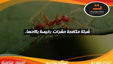 Photo of شركة مكافحة حشرات رخيصه بالاحساء