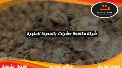 Photo of شركة مكافحة حشرات بالمدينه المنوره