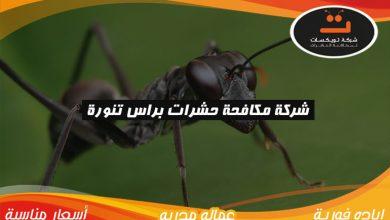 Photo of شركة مكافحة حشرات براس تنوره