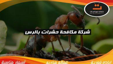 Photo of شركة مكافحة حشرات بالرس