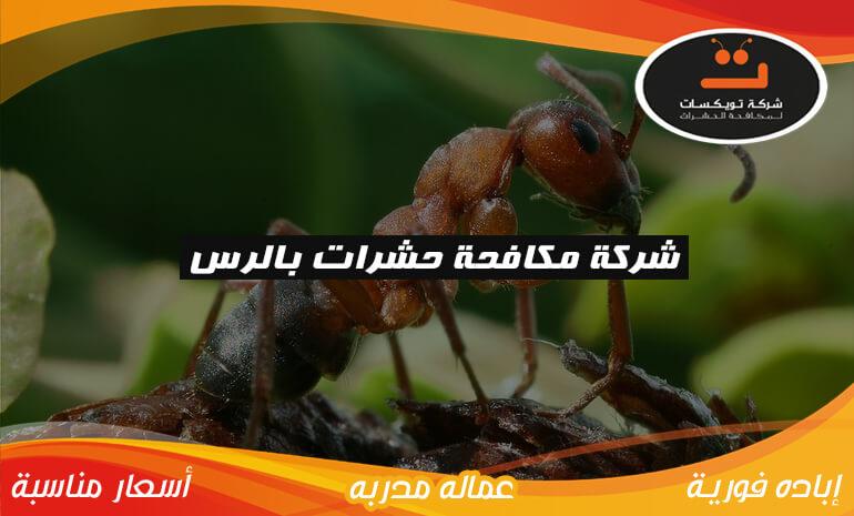 شركة مكافحة حشرات بالزلفي