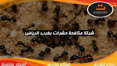 Photo of شركة مكافحة حشرات بغرب الرياض