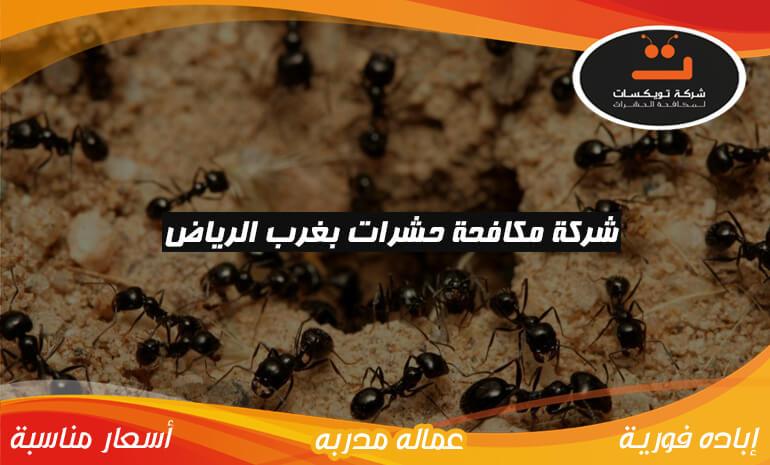 شركة مكافحة حشرات بغرب الرياض