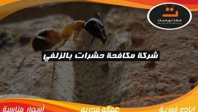 Photo of شركة مكافحة حشرات بالزلفي
