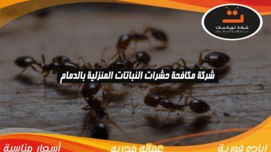 Photo of شركة مكافحة حشرات النباتات المنزليه بالدمام