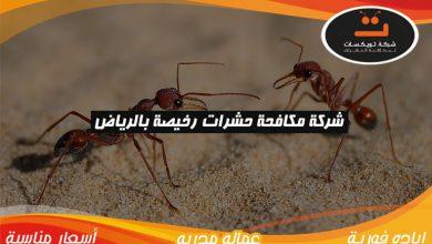 Photo of شركة مكافحة حشرات رخيصه بالرياض