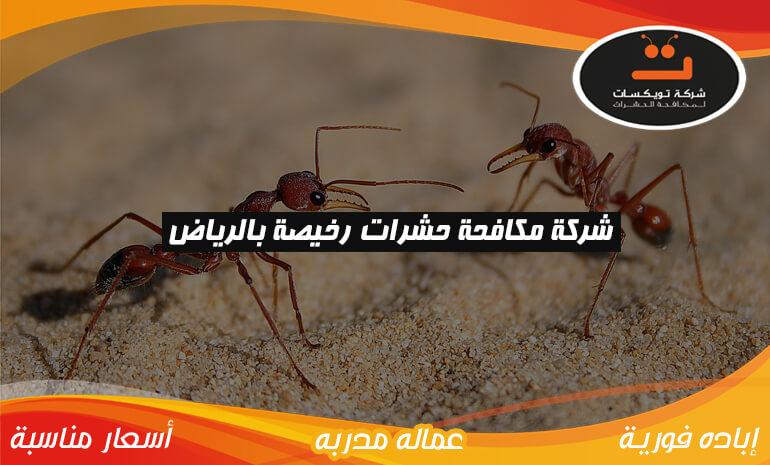شركة مكافحة حشرات رخيصه بالرياض
