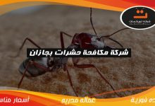 Photo of شركة مكافحة الحشرات بجازان