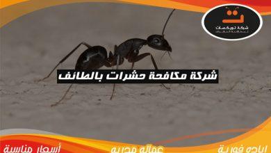 Photo of شركة مكافحة الحشرات بالطائف
