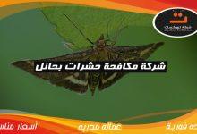 Photo of شركة مكافحة حشرات بحائل