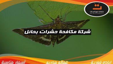 Photo of شركة مكافحة الحشرات بحائل
