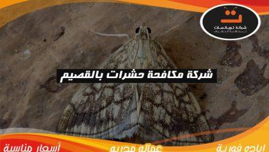 Photo of شركة مكافحة الحشرات بالقصيم