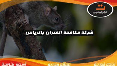 Photo of شركة مكافحة الفئران بالرياض