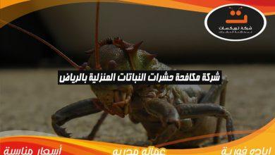 شركة مكافحة حشرات النباتات المنزلية بالرياض