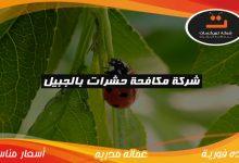 Photo of شركة مكافحة حشرات بالجبيل