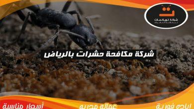 Photo of شركة مكافحة حشرات بالرياض