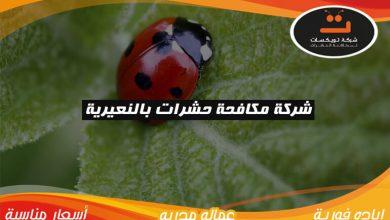 Photo of شركة مكافحة حشرات بالنعيرية
