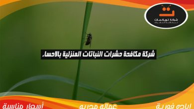 Photo of شركة مكافحة حشرات النباتات المنزليه بالاحساء