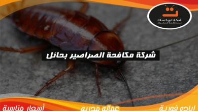 Photo of شركة مكافحة الصراصير بحائل