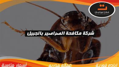 Photo of شركة مكافحة الصراصير بالجبيل