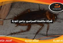 Photo of شركة مكافحة الصراصير براس تنوره