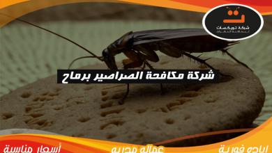 Photo of شركة مكافحة الصراصير برماح