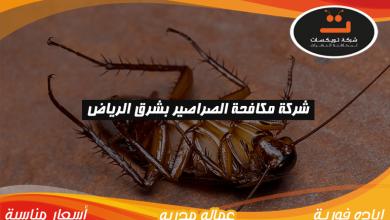 Photo of شركة مكافحة الصراصير بشرق الرياض